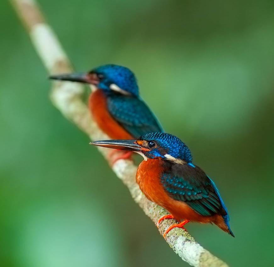 Home of Birds.JPG