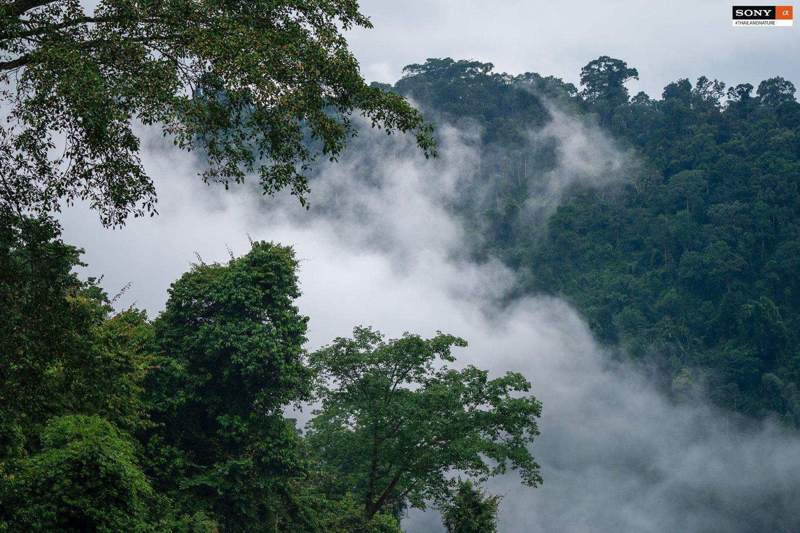 Nathapong Thailandnature6.jpg